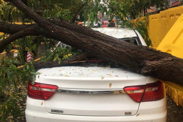 郑州街头树倒车被砸 是下雨惹的祸?雨说:这锅不背!
