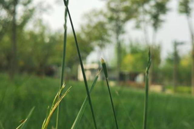 河南如何推进生态文明建设 这场会议上多位专家提出建议