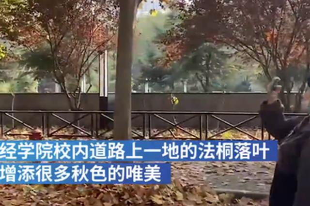 落叶铺满郑州一校园道路 女生:有电影场景的感觉