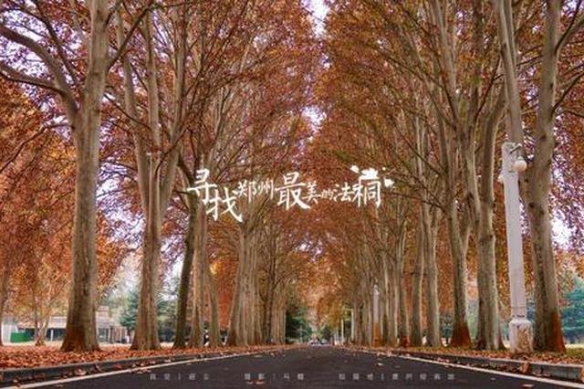 初冬季节 去寻找郑州最美的法桐(图)