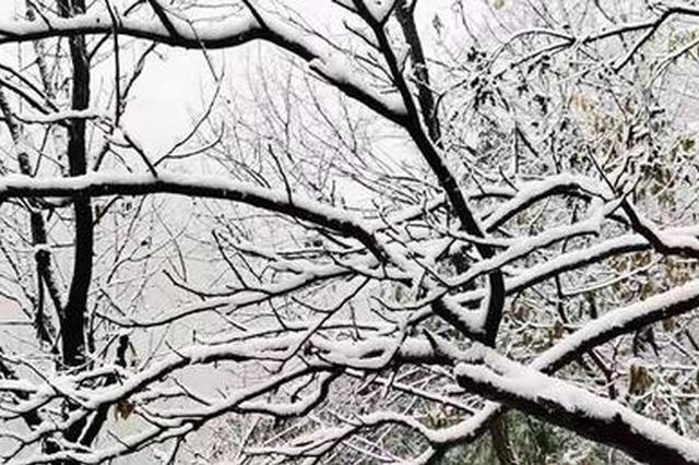 """河南这些地区雪花""""到货"""" 郑州第一场雪有些""""潦草"""""""
