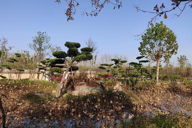郑州市林木种质资源普查工作圆满完成