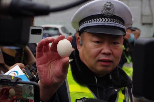 生鸡蛋遭撞击摔碎 郑州交警做实验证明安全带的重要性