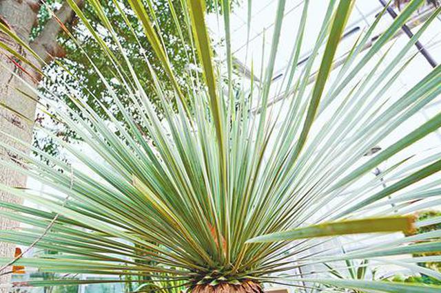 郑州植物园来了稀罕物 12种珍稀植物多为首次落户河南