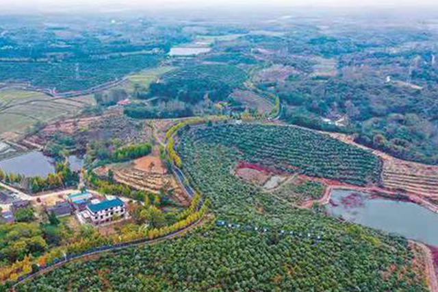 光山:油茶园里蹚出致富路(图)