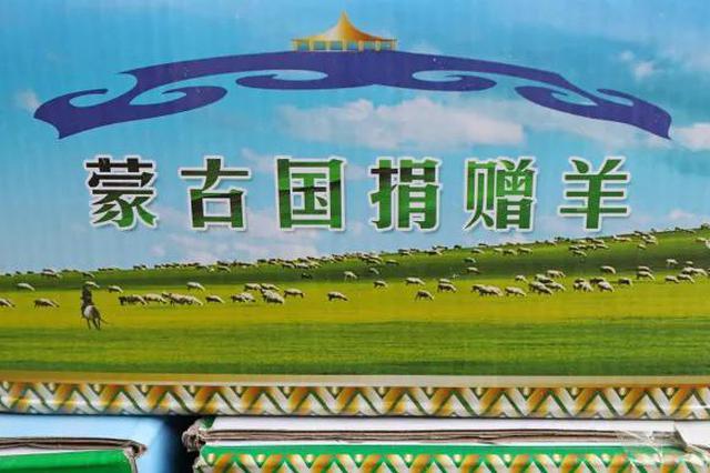 502只蒙古国捐赠羊抵豫 全部分配给援鄂医疗队员