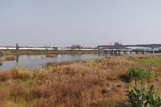 """3.6万亩!河南黄河生态廊道建设""""小目标""""定了"""
