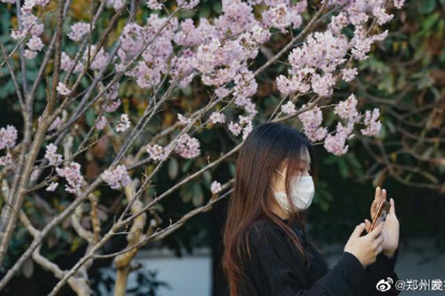 郑州人民公园的樱花开了 比去年早了半个多月(图)
