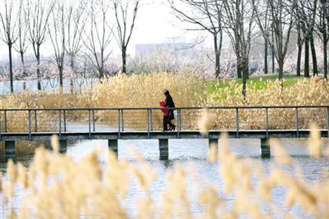 美景郑东:龙子湖春韵(图)