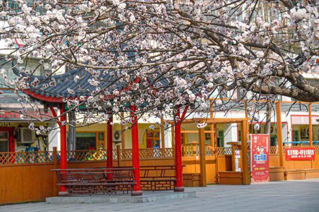 郑州:春风如贵客 一到便繁华(图)