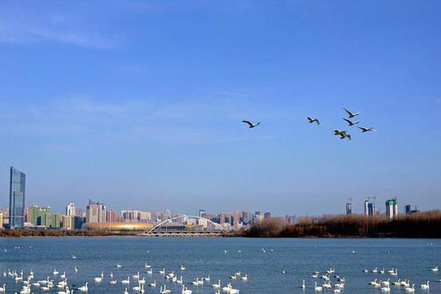 河南黄河湿地候鸟开启北迁之旅 我们十月再见!