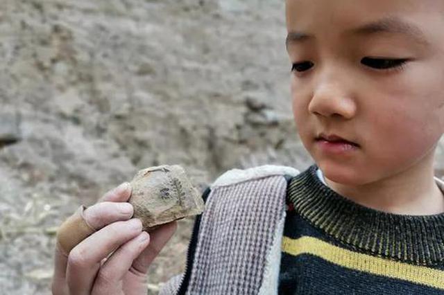 不可思议!登封6岁男童邂逅约3亿年前植物化石