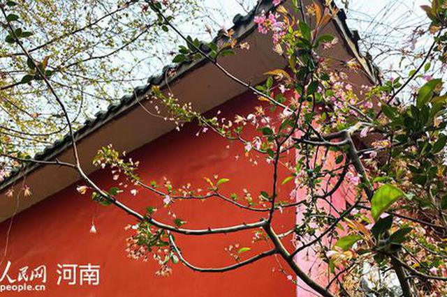 郑州:海棠花开醉春风(图)