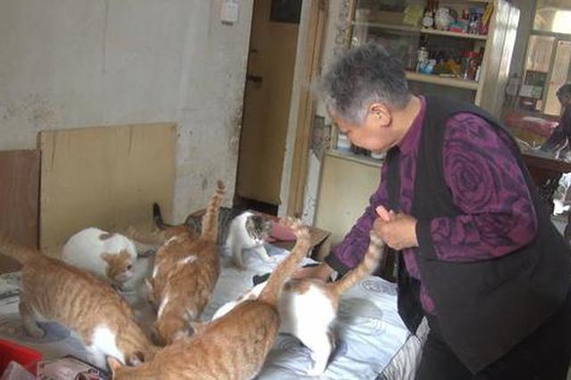 郑州老人用退休金救治残疾、流浪猫 把失宠小动物当孩子养