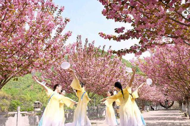 洛阳汝阳:深山樱花开 山村更精彩(图)