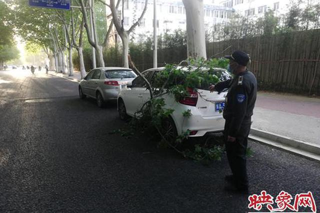 郑州一轿车停路边被断树枝砸中:死树枝可索赔 活树枝有难度