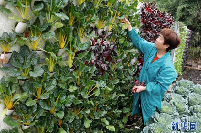平顶山宝丰:发展生态农业 助力乡村振兴(图)