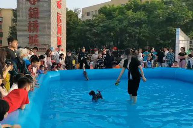 郑州:汪星人初次下水令人笑喷(图)