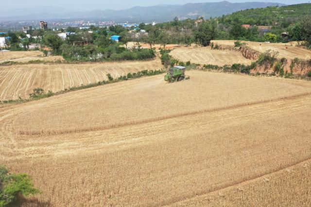 郑州市200余万亩小麦开镰(图)