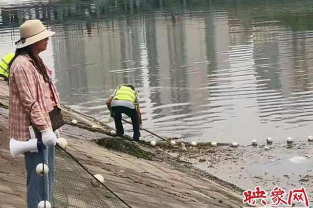 郑州东风渠污水直排鱼类呛死了?别信了!都是之前暴雨所致