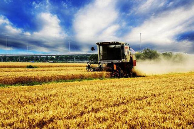 河南麦收工作接近尾声 夏粮收购工作准备就绪