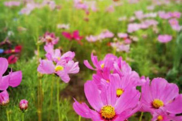 郑州市西流湖公园景观提升改造 45种宿根花卉打造一步一景