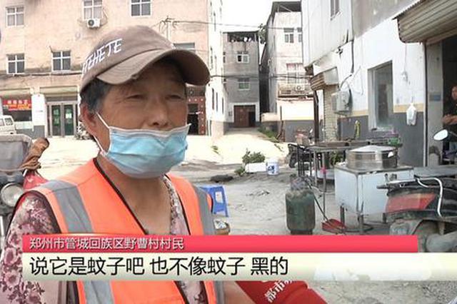 """郑州一村里出现""""神秘""""小黑虫 村民被咬得睁不开眼"""