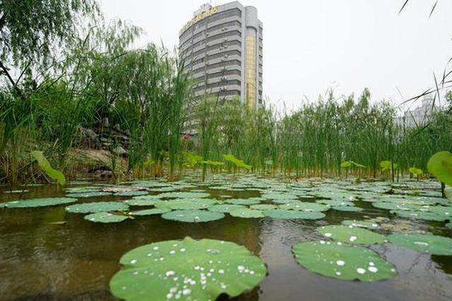 """郑州:雨中游""""雨园""""(图)"""