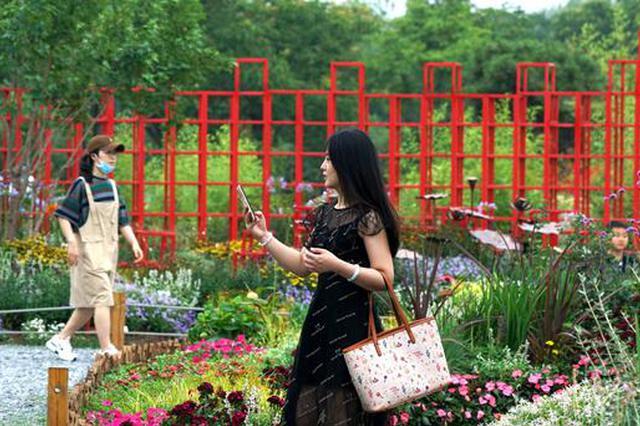 """55个小""""公园""""集中亮相 成郑州最红打卡点(图)"""
