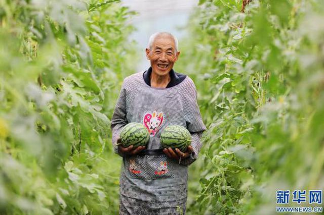 焦作温县:特色农业助力乡村振兴(图)