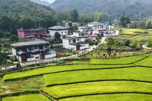 河南鲁山:乡村振兴生态美