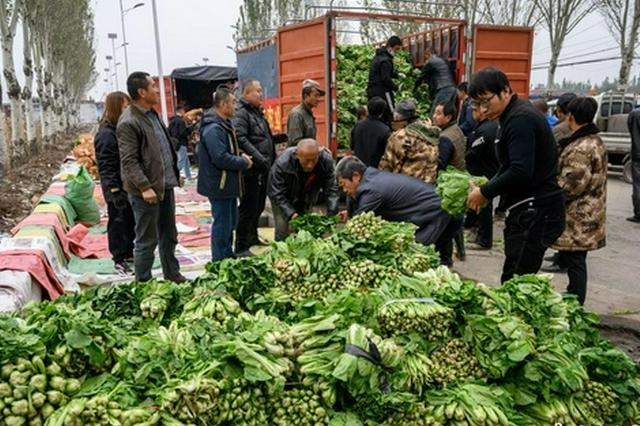 河南卫辉1.3万斤灾后复种蔬菜运至山西洪灾地区