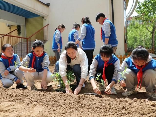 """郑州经开区实验小学开展劳动教育之""""太空种子""""种植活动"""