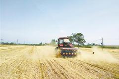 郑州小麦收获已过九成