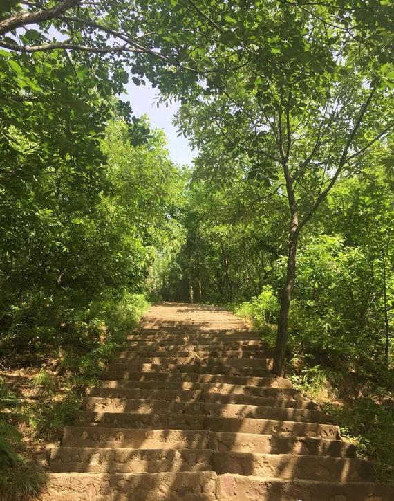 通往山上的林荫小道