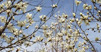 郑州公园廊道开启赏花模式