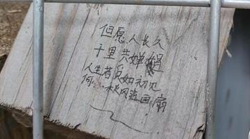 郑州龙子湖畔木块墙被妙手涂鸦成表白墙