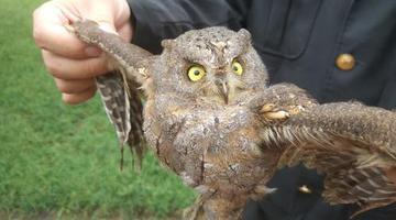 市民救下一只鸟 竟是国家保护鸟类