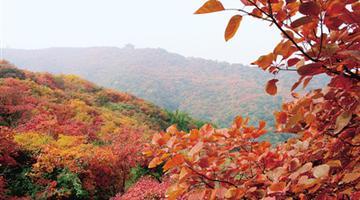 河南最美赏红叶、赏银杏地图