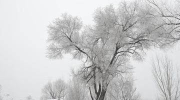 美呆了!郑州黄河大堤段现雾凇美景