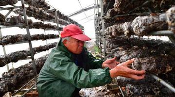 河南民权:林下经济助农增收