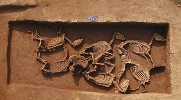 三门峡发现西周虢国邦墓