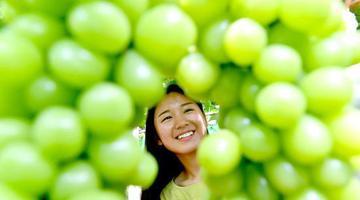 夏邑:葡萄成熟满园甜