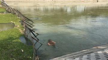 危险!郑州男子在湍急的东风渠里捞螺蛳