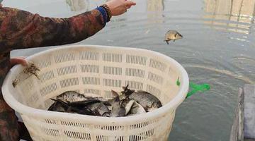 尴尬!郑州湖边放生人还没走鱼就被捞