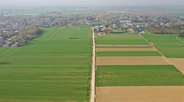 许昌:俯瞰绿色麦田