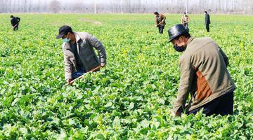 河南光山:抢抓农时 复工生产