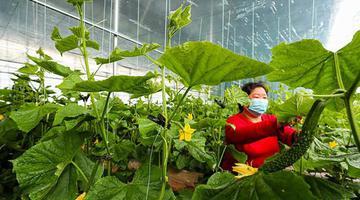 新乡:抢抓农时保绿蔬供应
