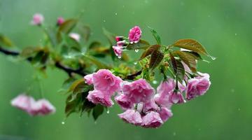 河南洛阳:雨后花儿更娇艳