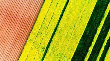洛宁:www.888msc.com,阡陌纵横的农田是一幅画